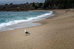 Seagull som ut ser över havet Royaltyfri Foto