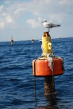 Seagull standing on a metal post. With tilt horizon in Sorrento, South Italy Royalty Free Stock Image