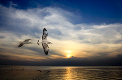 Seagull spread the wings on dark blue sky Stock Photo