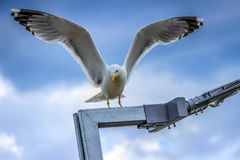 Seagull with spread wings. Sitting on a lamp Stock Photo