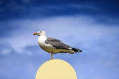 Seagull with spread wings. Sitting on a lamp Royalty Free Stock Image