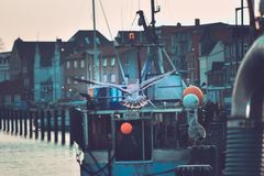 Seagull flying away at a fishingharbor in kappeln stock images