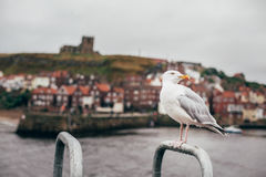 Seagull on Stainless Handle Stock Photo