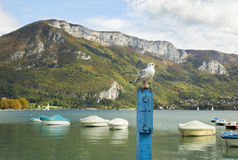 Seagull standing on a blue wooden post Stock Photo