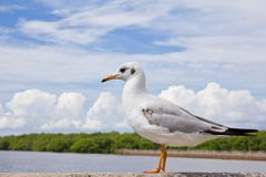 Seagull standing on concrete Stock Photo