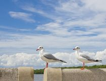 Seagull standing on concrete Royalty Free Stock Images