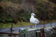 Seagull standing on the fence. Looking to the side Stock Photo