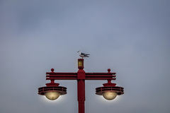 Seagull standing on a japanese eletric lamp - Tokyo, Japan Royalty Free Stock Photos