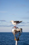 Seagull standing at the light pole Royalty Free Stock Photos