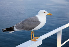 Seagull standing on metal bar. Cruise Ship's at Thassos island in Grece Stock Photo