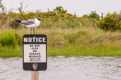 Seagull standing on a notice sign Stock Image