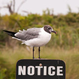Seagull standing on a notice sign Stock Images