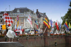 Seagull standing on a pillar, centre of Hague at lake Hofvijver Stock Photo