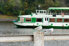 Seagull standing on a railing near the river Royalty Free Stock Images
