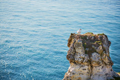 Seagull standing on a rock Stock Images