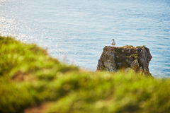 Seagull standing on a rock Stock Photography