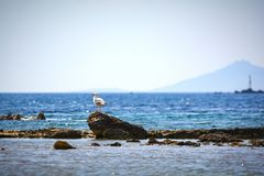 Seagull standing on a rock. Islet at the Aegean sea, Greece royalty free stock images