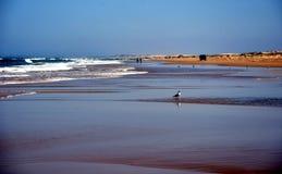 Seagull standing on the sand. Horizontal landscape of Stockton beach NSW, Australia royalty free stock photos