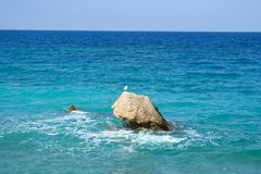 Seagull standing on the stone, the Aegaen, Greece. Seascape with a seagull standing on the coastal stone, the Aegaen, Greece royalty free stock images