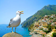 Seagull standing on stone in the background city Positano, Italy. Seagull standing on stone in the background city Positano on Amalfi coast, Campania region Royalty Free Stock Image