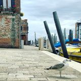 A seagull in Venice royalty free stock images