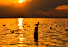 Seagull standing on a stump in marina at sunset. Stock Photos