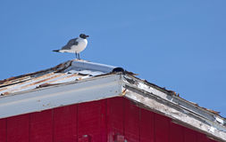 Seagull standing on top of a house. A seagull standing on top of a beach safeguard house on a sunny summer day Royalty Free Stock Photo