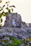 Seagull standing on a wall Stock Photo