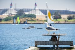 Seagull standing on a water release valve, Shoreline Lake and Park, Mountain View, California stock image