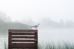 Seagull standing on wooden pier. Sunrise mist over lake on background stock images