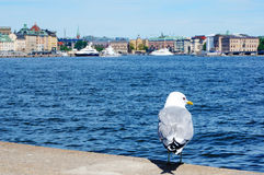 Seagull stands and old town (Gamla Stan) pier architecture in St Stock Images