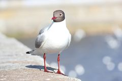 A seagull stands on the parapet of the embankment stock photo