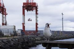 Angry bird and harbour Stock Images