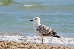 The seagull Stock Photos