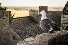 A seagull stands on a stone wall against the backdrop of the medieval stone house of the Saint Michel stock images
