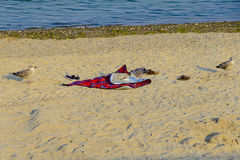 A seagull starts to pull a beach blanket Stock Photo
