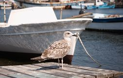 Seagull stayed on the pier Royalty Free Stock Photography