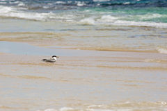 Seagull staying in the water on shore Royalty Free Stock Photos