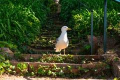 A seagull on the steirs. Of the Santa Clotilde Gardens in Lloret de Mar royalty free stock photos