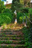 A seagull on the steirs. Of the Santa Clotilde Gardens in Lloret de Mar Royalty Free Stock Image