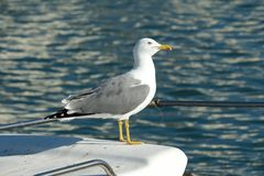 Seagull on the stern Stock Photo