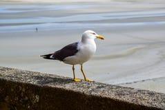 Seagull stojaki na ścianie obraz royalty free