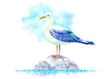 Seagull on a stone. Marine landscape. Watercolor hand drawn illustration. White background Stock Image