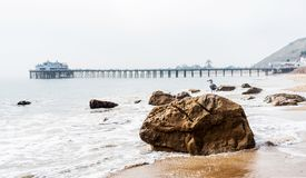 A seagull on a stone on a sandy beach in Malibu, California, USA. Copy space for text stock images