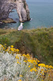 Seagull on stony coast near etretat in the North of France Stock Photography