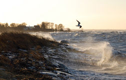 Seagull on stormy sea Royalty Free Stock Photos