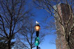 Seagull on street lamp Stock Image