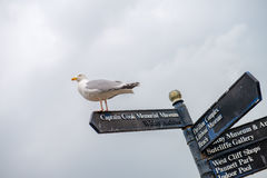 Seagull on a street nameplate Royalty Free Stock Photo