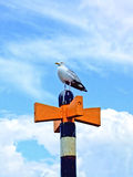 Seagull in Summer Stock Image