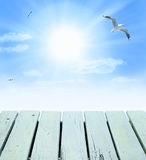 Seagull Sunny Sky Background Stock Photos